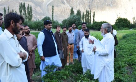 SEED USERS VISITED SEED POTATO FIELDS IN GILGIT BALTISTAN